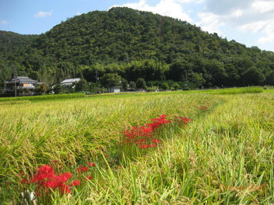 aki2009-1.jpg
