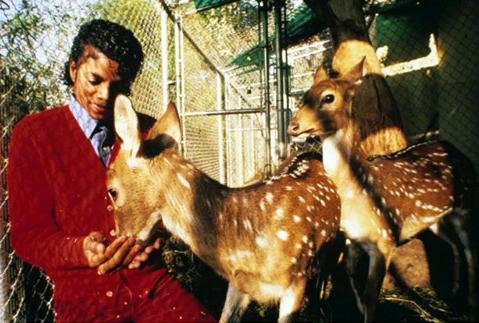 マイケル、鹿のプリンスとプリンセス
