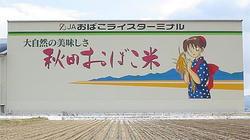 obako_top.jpg
