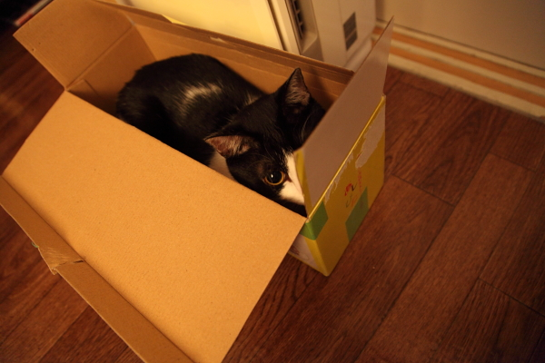 ミスタードーナツ 箱ネコ