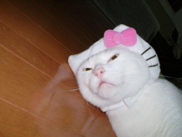 キティ ヌコ