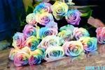 r-rose1.jpg
