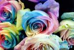 r-rose2.jpg