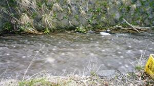 春の濁流。