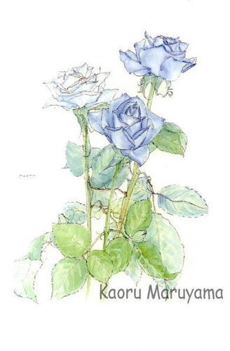 HA-01青いバラ