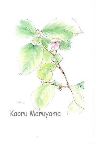 HA-04カリンの花