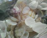 角島で拾った貝がら
