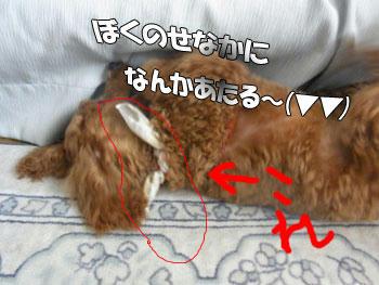 20100809_01.jpg