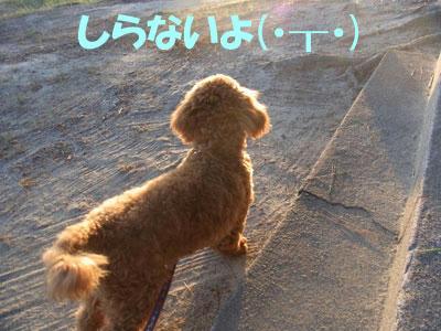 20100909_03.jpg