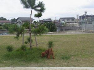 20101022_01.jpg