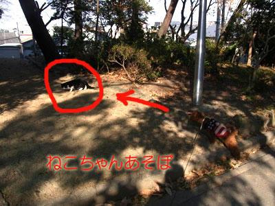 20101227_01.jpg