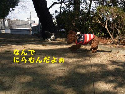 20101227_04.jpg