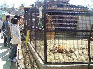 080322_1241_須坂市動物園・春の動物園まつり