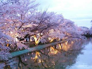 080419_1828_薄暮の臥竜公園に咲くソメイヨシノ