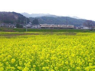 080426_1447_辰野町松尾峡の菜の花(電車)