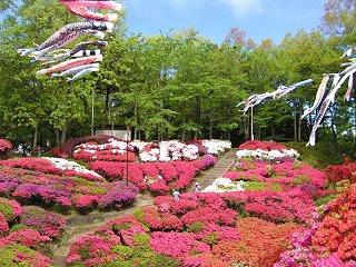 080503_1008_下伊那郡松川町の台城公園に咲くつつじ