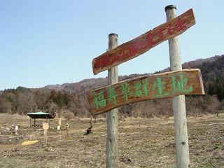090321_1330_福寿草群生地(木島平村)