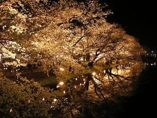 090411_2116_臥竜公園の夜桜(須坂市)