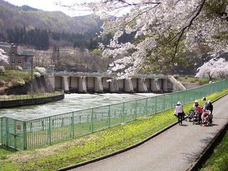 090419_1131_西大滝ダムのサクラ並木(飯山市)