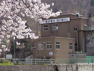 f090419_1134_西大滝ダムのサクラ並木(飯山市)