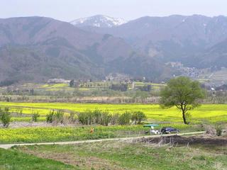 090419_1205_飯山市常盤の菜の花畑(飯山市)