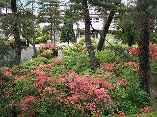 090516_1207_波田小学校のヤマツツジ(波田町)