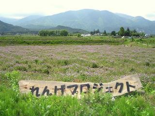090523_1359_安曇野堀金「れんげの里」づくりプロジェクトチーム」(安曇野市)