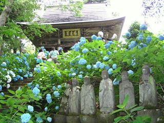 090705_1109_高源院のあじさい(飯山市)
