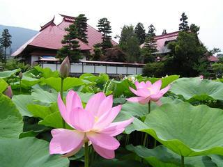 090705_1042_稲泉寺の蓮(木島平村)