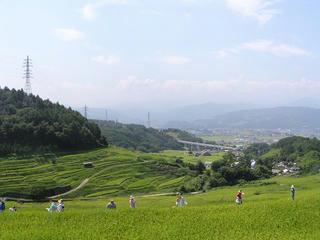 090906_1100_稲倉棚田(上田市)