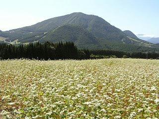 090920_1305_法印さんとそばの花まつり(山ノ内町須賀川)