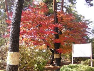 091114_1219_波田小学校の紅葉(波田町)