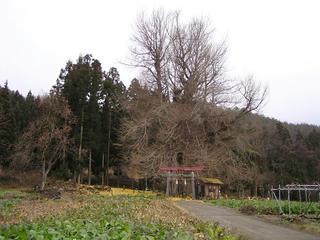 091206_1112_神戸のイチョウ(飯山市)