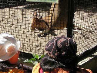 091012_1137_秋の動物園まつり(須坂市)