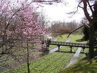 100320_1210_大王わさび農場に咲く紅梅(安曇野市)