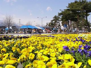 100327_1219_花のじゅうたん祭り(松川村)