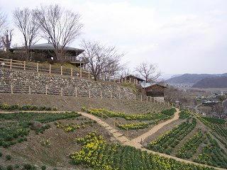 100327_1545_信州国際音楽村・すいせんまつり2010(上田市)