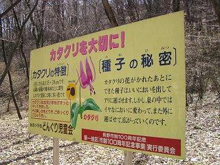 100404_1049_カタクリ群生地(長野市)