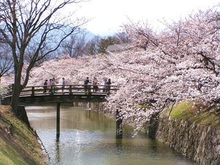 100410_1439_松本城外堀に咲くサクラ(松本市)