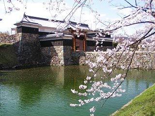 100410_1436_松本城太鼓門とサクラ(松本市)