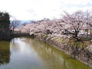 100410_1441_松本城外堀に咲くサクラ(松本市)
