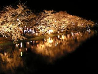 100414_2031_臥竜公園のサクラ(須坂市)