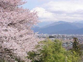 100424_1230_篠ノ井小松原の光林寺のサクラ(長野市)