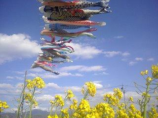 100424_1531_ほりがね物産センター南側休耕田に泳ぐ鯉のぼり(安曇野市)
