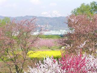 100501_0726_千曲川ふれあい公園(小布施町)