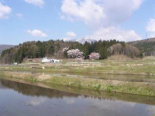 100501_0835_黒川桜林のエドヒガン(飯綱町)