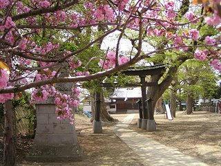 100504_1237_軻良根古神社(長野市)
