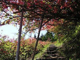 100515_0907_豊野つつじ山公園(長野市)