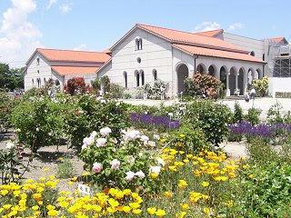 100605_1232_豊科近代美術館に咲くバラ(安曇野市)