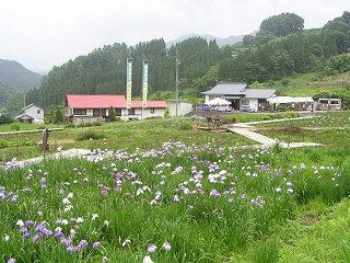 100703_1216_白髭神社前の花菖蒲園(長野市)